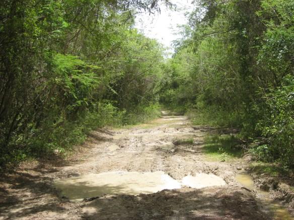 Playuela beach path, Vieques Best Beaches