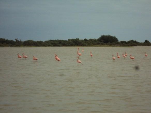 things to do in Playa Del Carmen, flamingos