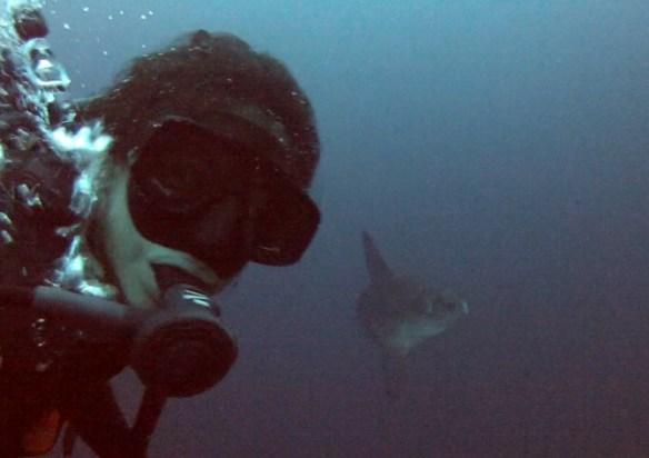 Nusa Penida diving mola-molas
