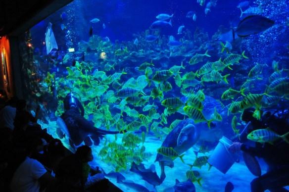 off-the-beaten-path Kuala Lumpur attractions, Aquaria