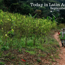 UN Report: Colombia Coca Production at All-Time High