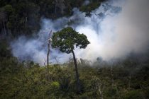 Concern Over Amazon Rainforest Fires Reaches Globe