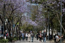 Mexico's Busy Streetscape Slows, But Doesn't Stop for Virus
