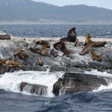 leoni marini Ushuaia