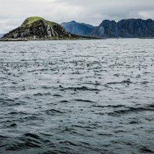 Honnnisvag Birdwatching Gjesværstappan-Christian Roth Christensen - VisitNorway.com (2)