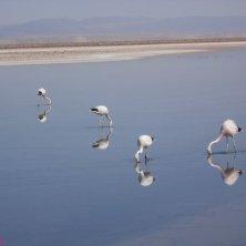 riserva Los Flamingos