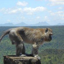 scimmia-al-black-river-park