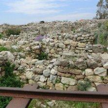 fiori tra i resti archeologici