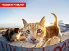 gatti simbolo Turchia