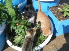 gattini nel vaso