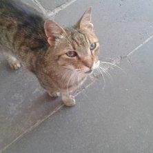 gatto curioso a Bodrum