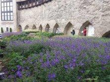 mura e giardini a Tallinn