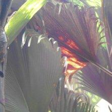 foglie di palme