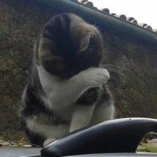 gatto a Calcata