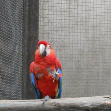 pappagallo con biscotto