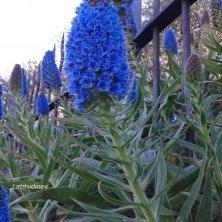 aiuole fiorite a Sanremo