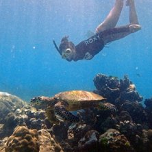 biologa controlla la tartaruga