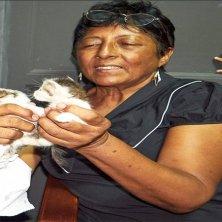 volontaria con gattini