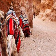 cammelli a Petra