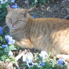 gatto agli Upper Barrakka Gardens
