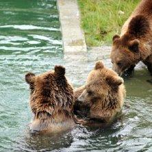 i tre orsi fanno il bagno