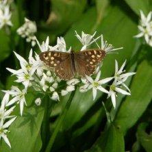 farfalla al giardino botanico