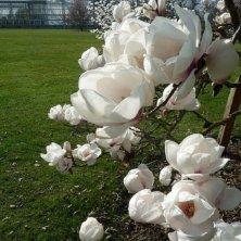 fiori bianchi al giardino botanico