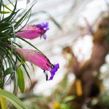 fiori tropicali a Meise