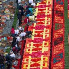 preparazione del tappeto di fiori