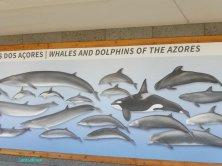 cartellone sui cetacei