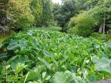 giardino Terra Nostra