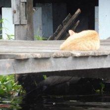 gatto sul molo del tempio