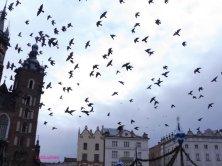 piccioni in volo piazza del Mercato