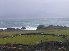 pecore e vista a Malinhead