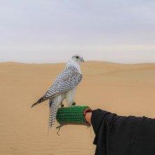 Al Marmoom Bedouin Experiences (1)