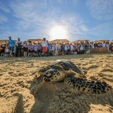 Turtle Rehabilitation Project
