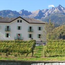 Vitigni Istituto Agrario Fobelli Crodo - Val d'Ossola - Ossola in Cantina (1)