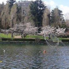 laghetto in primavera