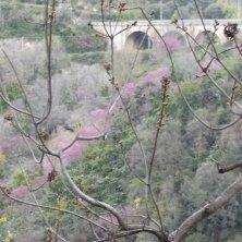vegetazione nel parco Villa Gregoriana