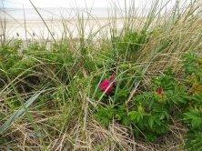fiori tra la sabbia
