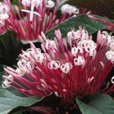 fioritura Jardin