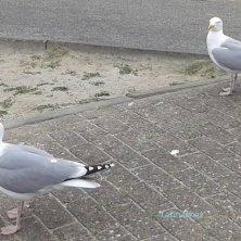 gabbiani in attesa davanti al chiosco