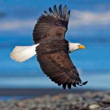 bald-eagle-beach-dewhurst