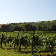 Colli Euganei_ casa rurale e vigneto