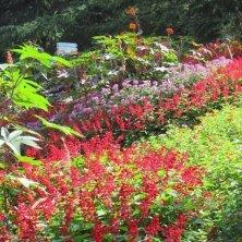 fioriture ai Giardini di Castel Trauttmansdorff