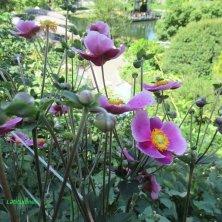 sentieri fioriti Giardini di Castel Trauttmansdorff