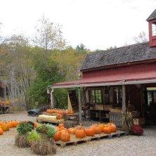Massachusetts Pumpkins - Credit MOTT