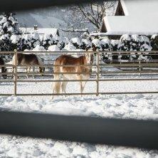 Kufsteinerland Winter_Ebbs_(c) VAN MEY Natale in maneggio