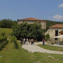Vigne e Cantina_Arquà Petrarca_EVallarin tour dell'eccellenze
