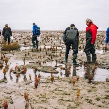 Capodanno danese ostriche